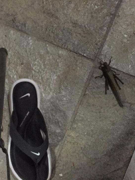 Giant grasshopper!